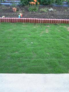 芝とつばめ。
